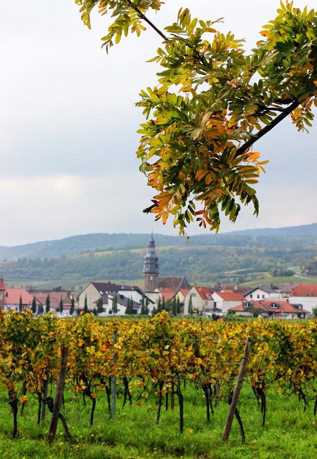 Weinwanderung, Pfalz, Trauben, Weinanbau, Weinstöcke