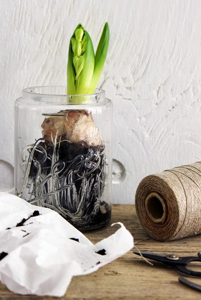 weiße Hyazinthen im Glas, Horex Glas; Gartenschere, Garnrolle