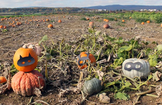 Halloween-Kürbis-Maske-DiY-Idee-Blog-Jennadores-schwarze-Maske-Bastel-Kürbisfeld