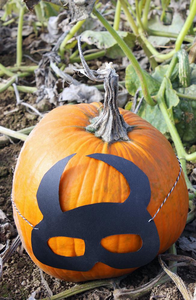 Halloween-Kürbis-Maske-DiY-Idee-Blog-Jennadores-schwarze-Maske-basteln-Batmanmaske-Kürbisfeld