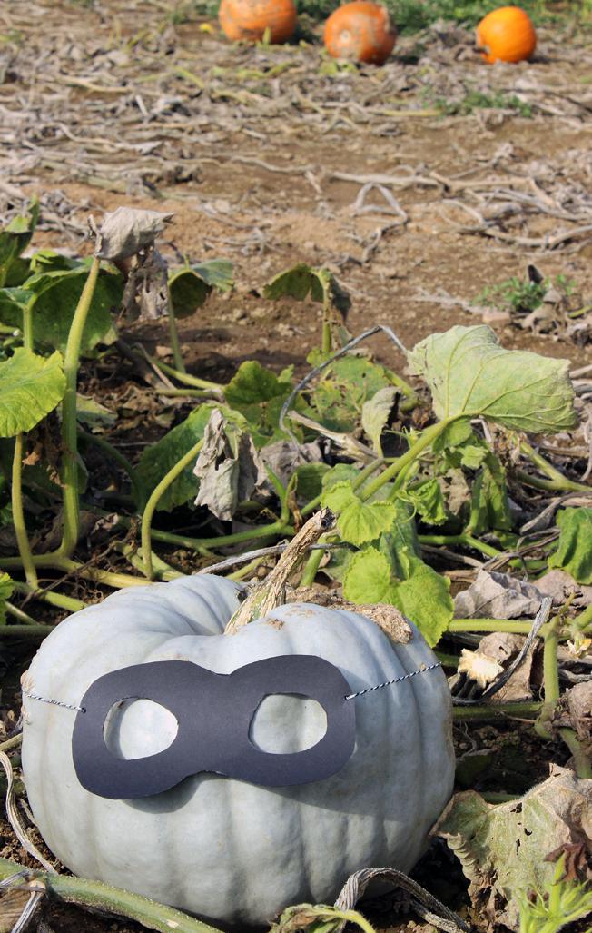 Halloween-Kürbis-Maske-DiY-Idee-Blog-Jennadores-schwarze-Maske-basteln-Kürbisfeld-weißer-Kürbis