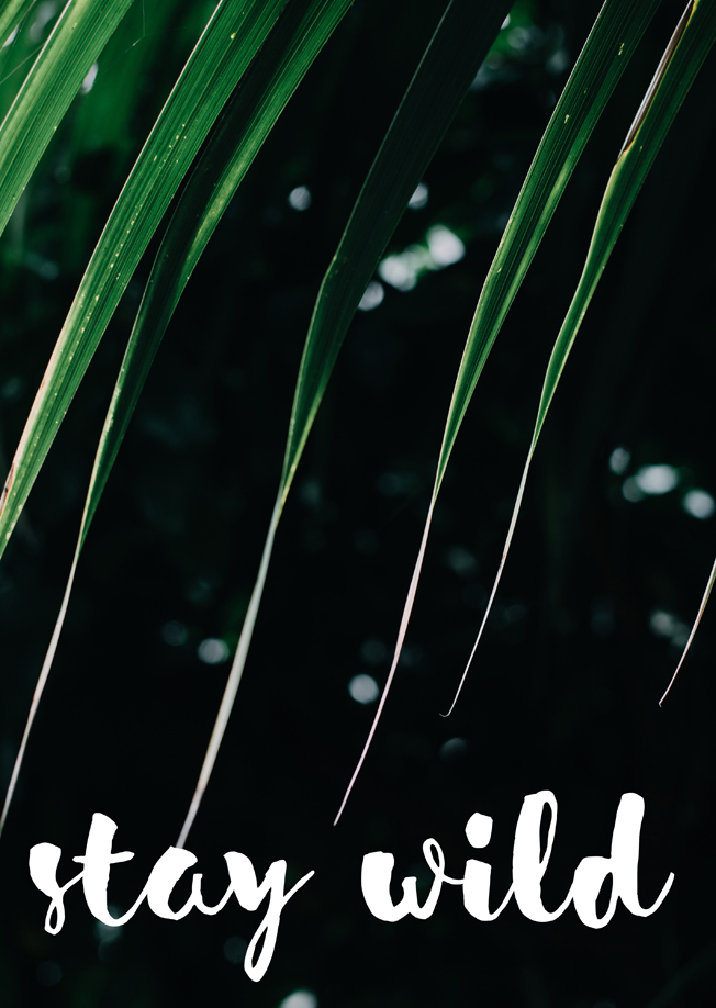 Print-Stay-Wild-Blog-Jennadores-Dschungle-Bild