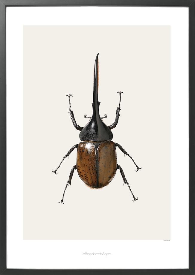 Hagedornhagen-Jennadores-Blog-Prints-Gallery-Käfer-Druck-Still