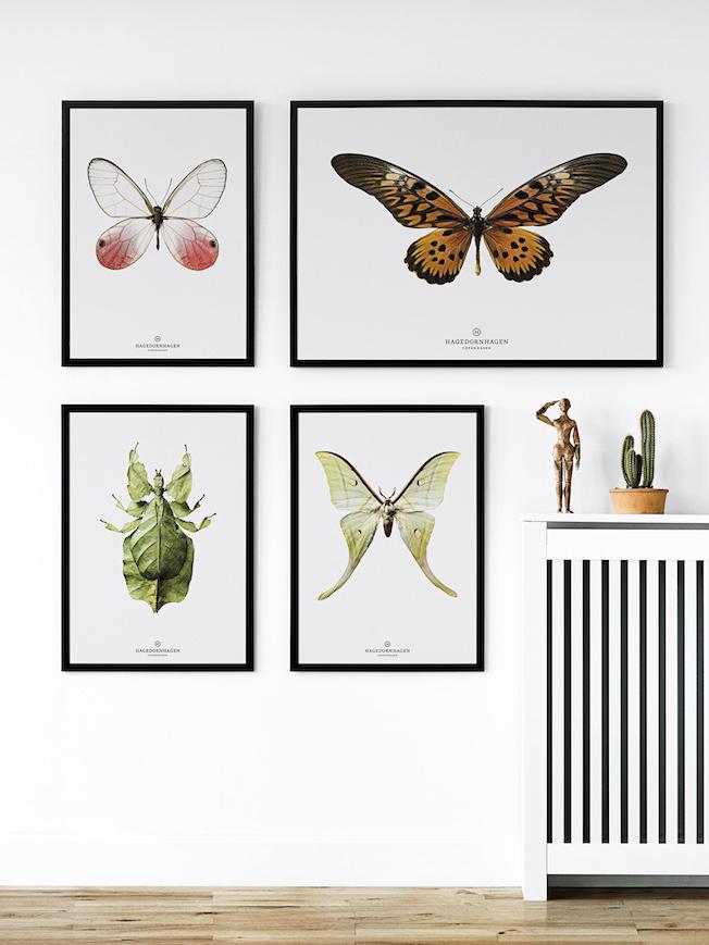 Hagedornhagen-Prints-Blog-Jennadores-Interior-Schmetterling-Drucke-Galerie