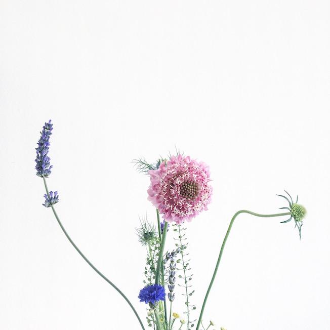 Wiesenblumen-Strauß-Blog-Jennadores