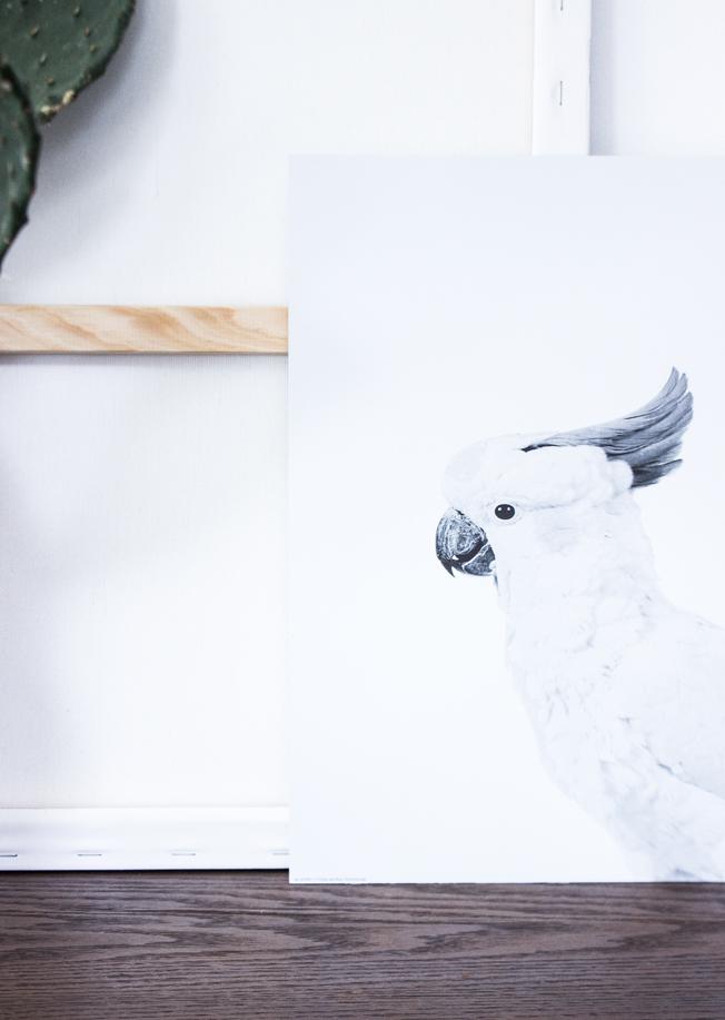 Print-Papagei-Posterlounge-Blog-Jennadores-Feigenkaktus