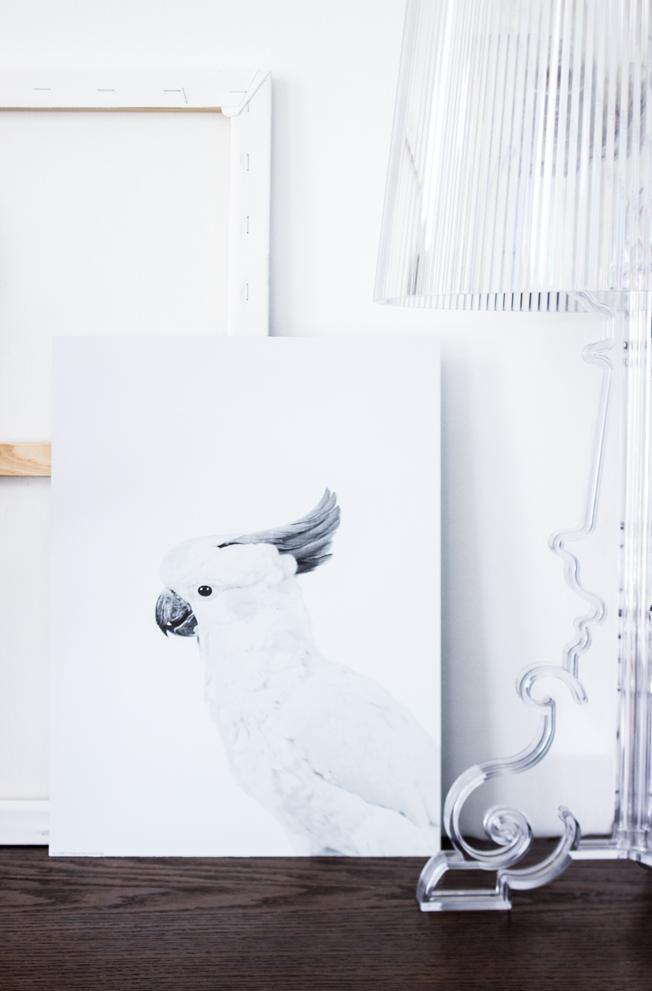Print-Papagei-Posterlounge-Blog-Jennadores