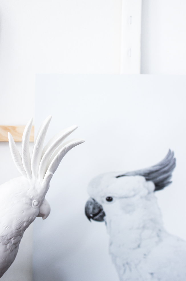 Print-Papagei-Posterlounge-Pols-Potten-Blog-Jennadores