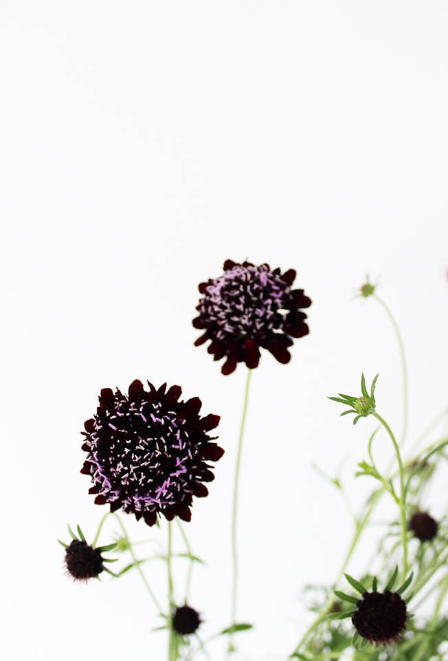 scabiosa-lila-dunkel-blog-jennadores-tablesetting