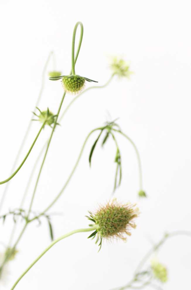 scabiosa-weiss-blog-jennadores-tablesetting