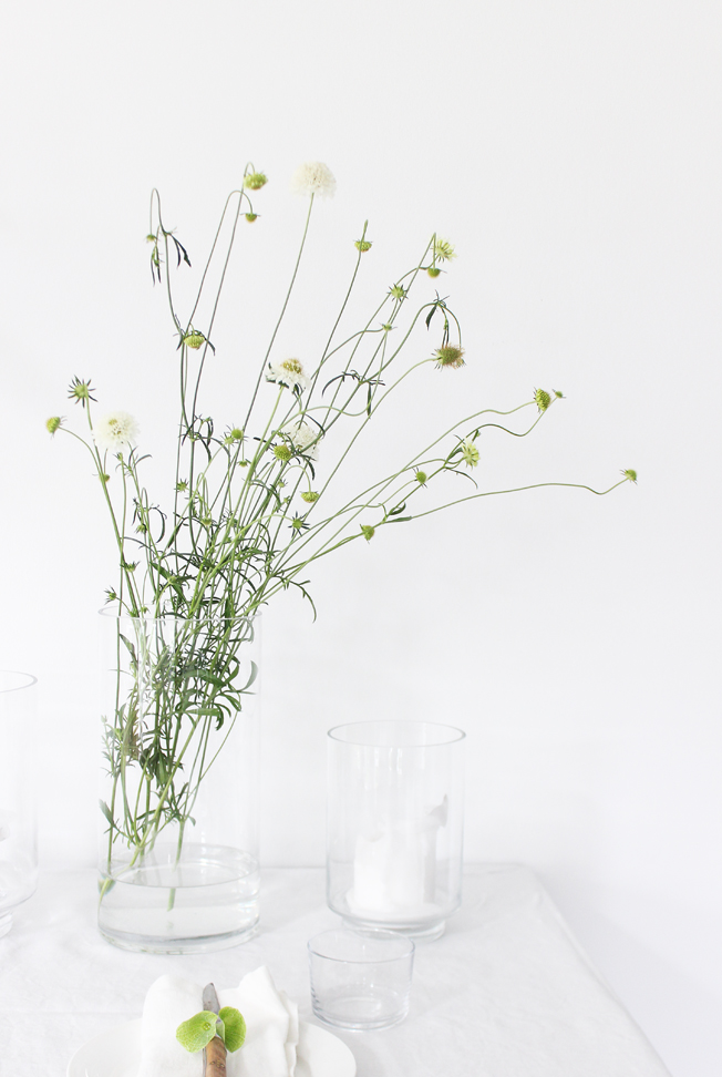 scabiosa-weiss-strauss-blog-jennadores-tablesetting