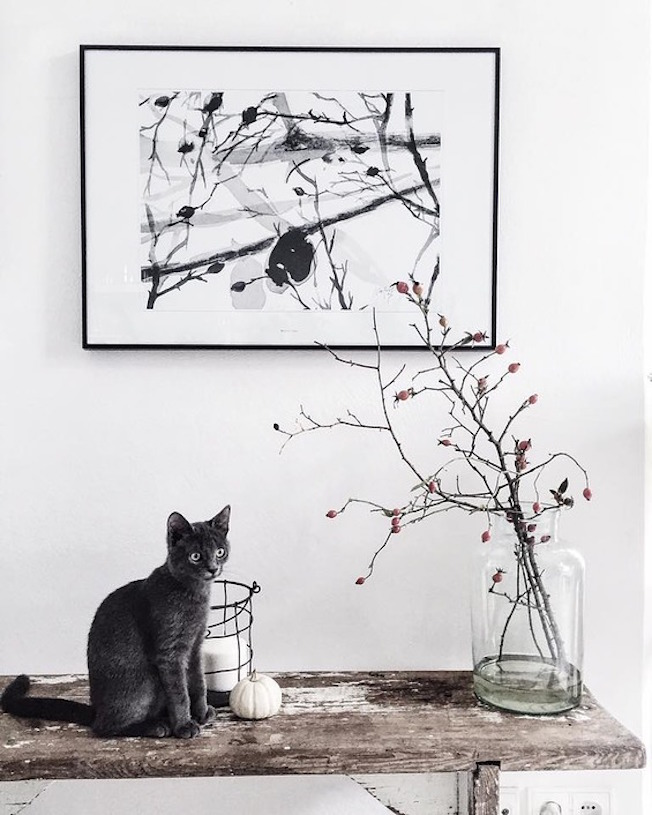 print_margo_hupert_blog_jennadores-wild-rose-cat