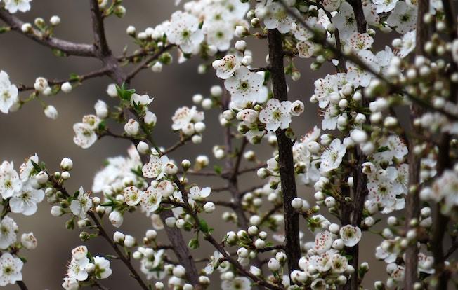 Apfelblueten, Fruehling, Garten, Tipps, Winterblues,