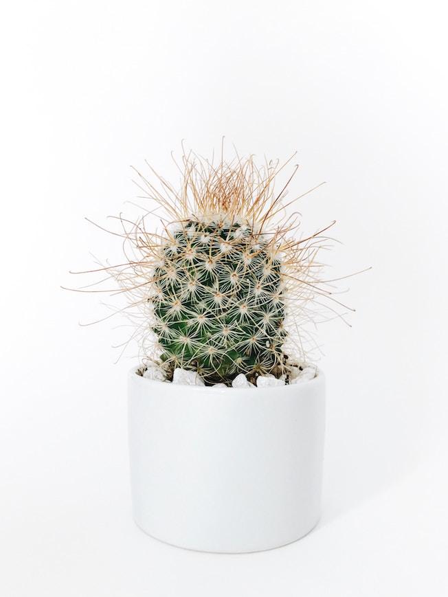 Mama, Muttertagsgeschenk, Kaktus, Idee, Kaktus vor weißem Hintergrund