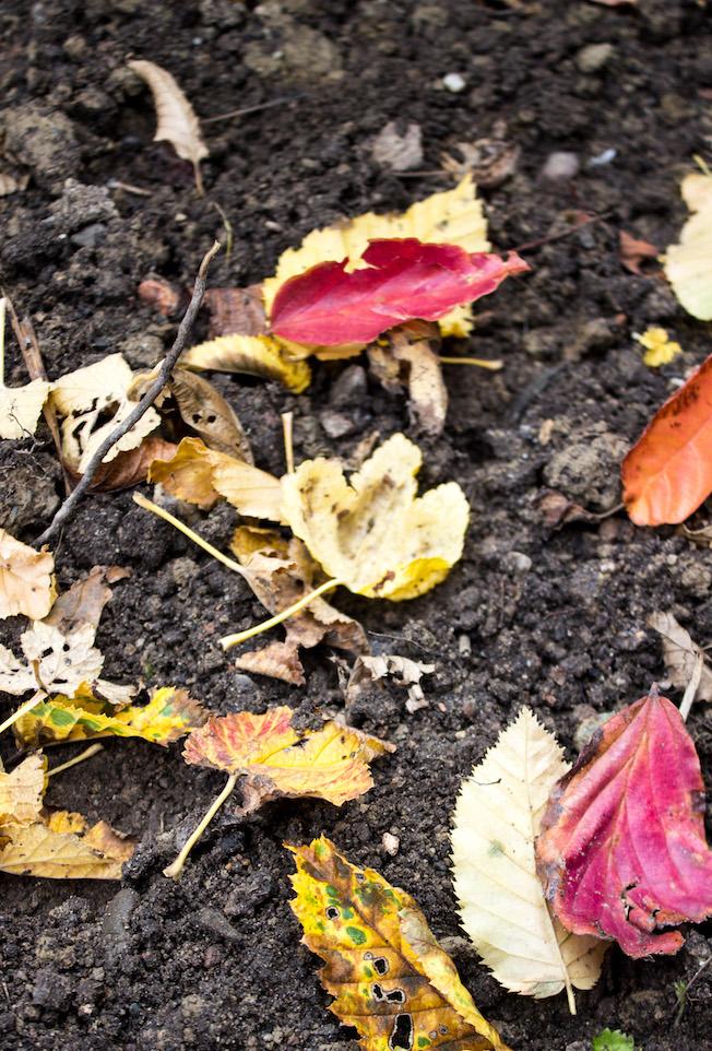 Garten im Herbst, Blumenzwiebeln stecken, Tipps, Blog Jennadores